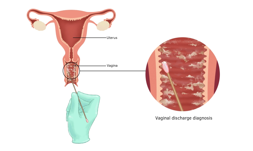 The science of your vagina